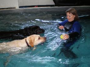 SpawZ Dog Daycare and Swim Center