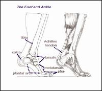 Ankle & Foot Ctr