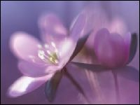 Flowers By Phil - Homestead Business Directory