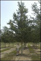 Southern Pride Tree Farm Inc - Homestead Business Directory