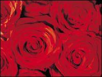 Central Floral Gardens - Homestead Business Directory