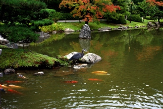 Seattle Japanese Gardens - Seattle, WA