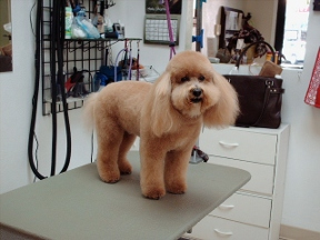 Park Hill Pooch - Homestead Business Directory