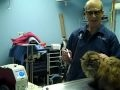 Abell Animal Hospital- Quality, High Tech Pet Care - Chicago, IL