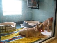 Vca Coral Springs Pet Resort And Medical Center - Pompano Beach, FL