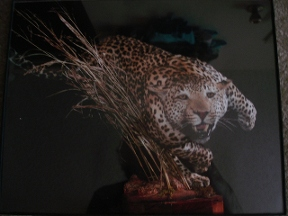Poetry Taxidermy - Terrell, TX