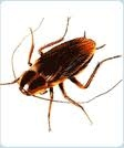Absolute Pest Management - Spartanburg, SC