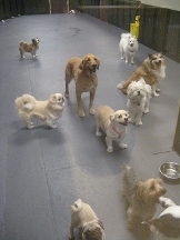 South Park Doggie Day Care Spa and Supplies - Los Angeles, CA