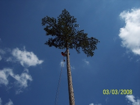 Allen Tree Service - Cary, NC