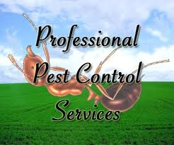 All Statewide Termite And Pest Control - Phoenix, AZ