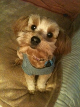 Pampered Pooch - Homestead Business Directory