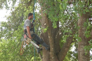 USA Tree Service - Spring Hill, FL