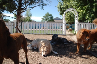 Dog Boarding Near Aurora Co