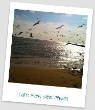 Jersey Cape Realty INC - Cape May, NJ