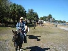 Sun City Stables - Ruskin, FL