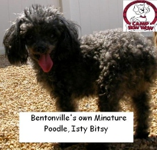 Camp Bow Wow - Bentonville, AR