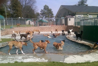 Camp Wagging Tails - Cornelius, NC