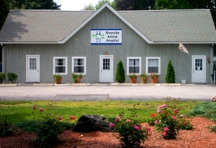 Riverside Animal Hospital - Riverside, RI