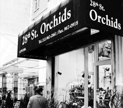 28th street orchids