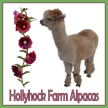 Hollyhock Farm Alpacas