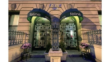 Feline Day Spa - New York, NY