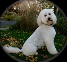 Mobile Dog Grooming Minneapolis