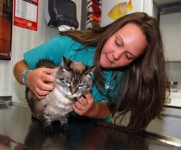 Allenwood Animal Hospital - Allenwood, NJ