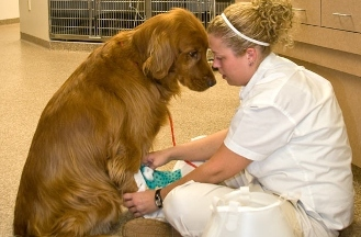 Ehlers, Megan, DVM Nebraska Animal Medical Ctr - 3 Reviews ...