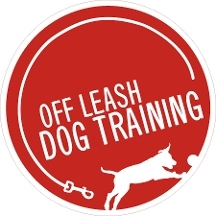 Off Leash Dog Training - Loveland, CO