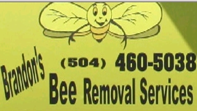 Brandon's Bee Removal Services