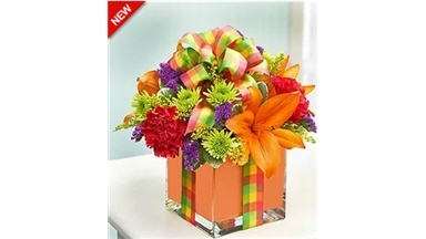 Party & Gift - Morrisville, NC