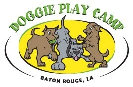 Doggie Play Camp
