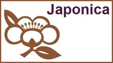 Japonica