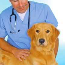 Miami Veterinary Specialists