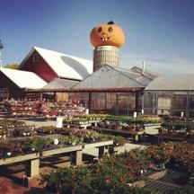 Goebbert 39 S Farm Garden Center In South Barrington Il 60010 Citysearch