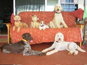 South park doggie day care spa and supplies in los angeles for Best dog boarding los angeles