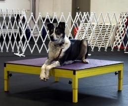 My Dogs Gym and Training Centre - Salem, OR