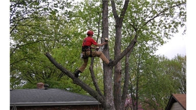 Ed&#039;s Tree Service
