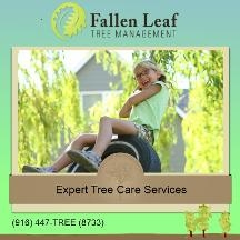 Fallen Leaf Tree Management