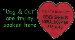 Seven Springs Animal Hospital - New Port Richey, FL