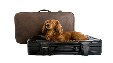 Dog Boarding Knoxville Tn Review S