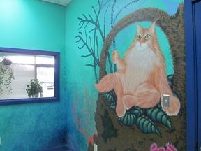 Cat Clinic Of Cary