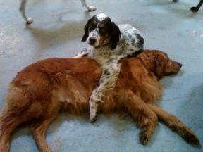 Canine Campus Dog Daycare & Overnight Boarding - Colorado Springs, CO