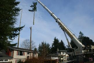 Sunrise Landscaping & Tree Removal - Olympia, WA