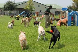 Rover Oaks Pet Resort - Houston, TX