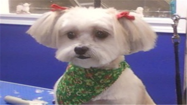Cute cuts dog grooming by kim in hillsboro or 97123 citysearch solutioingenieria Images
