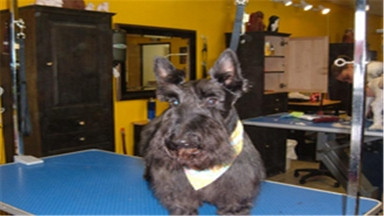 Cute cuts dog grooming by kim in hillsboro or 97123 citysearch cute cuts dog grooming by kim solutioingenieria Images