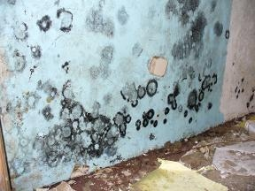 Charlotte Mold Removal