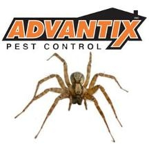 Advantix Pest Control
