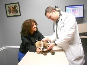 Maywood Veterinary Clinic - Maywood, NJ